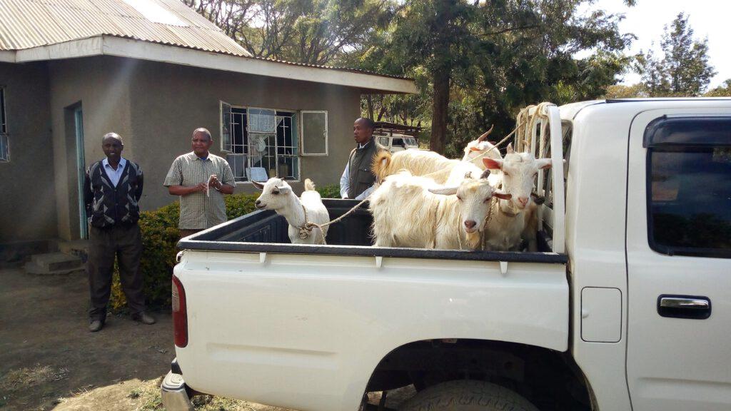Heifer-Projekt Tansania